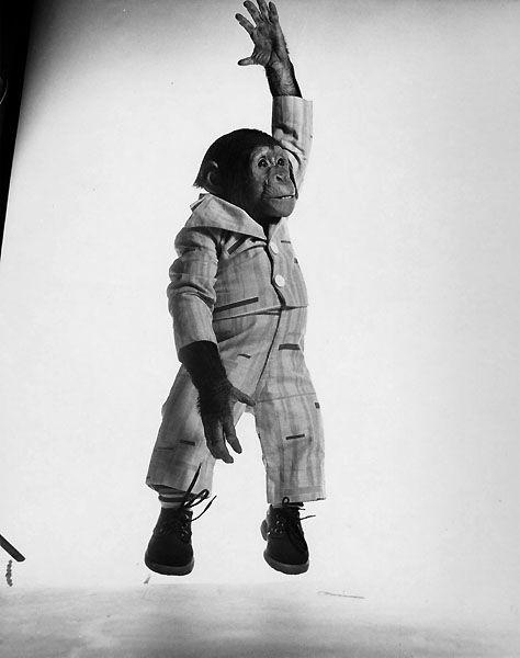 Mono volador.